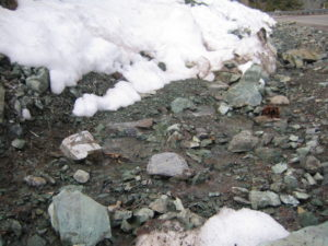 Actinolite and Snow in Wrightwood California